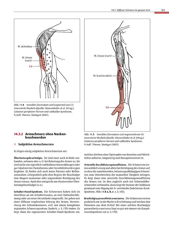 Schön Segmentale Bronchien Anatomie Zeitgenössisch - Anatomie Ideen ...